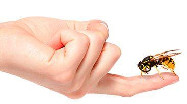 picadura insecto2