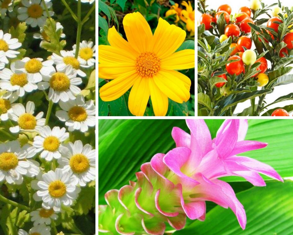 4 plantas que te ayudan a aliviar el dolor