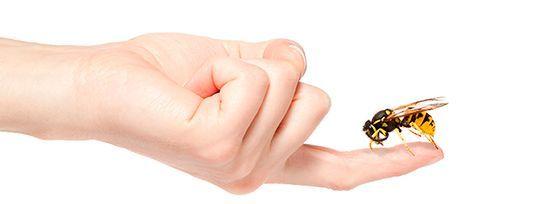 Consejos para aliviar las picaduras de insectos