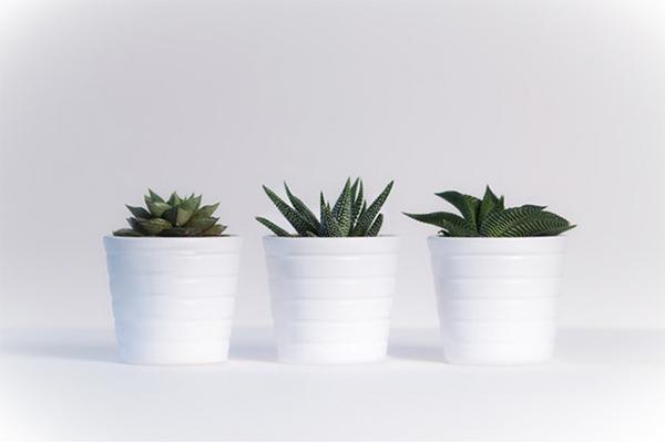 plantas saciantes